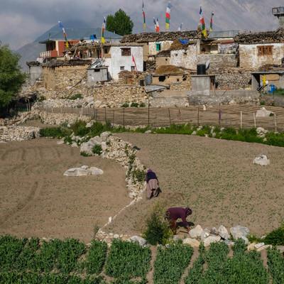 नाकोतले शेतात काम करणारे शेतकरी