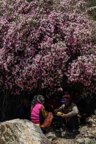 जंगली गुलाबाच्या झुडपांखाली विश्रांती घेणारे कामगार