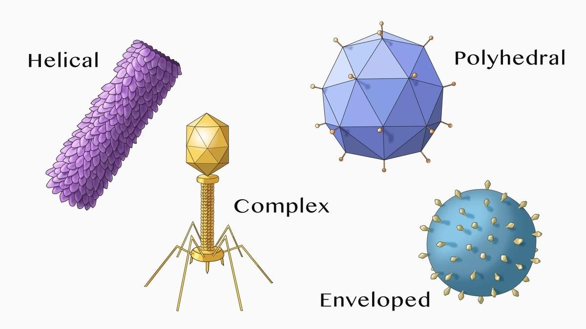 Virus Shapes